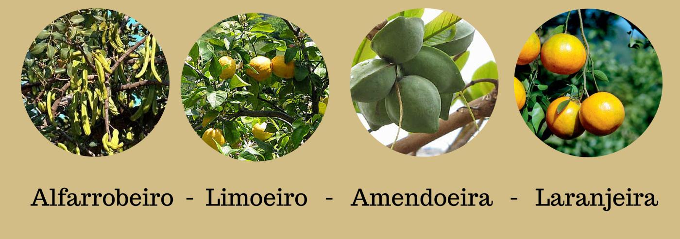 Alfarrobeiro - Limoeiro - Amendoeira - Laranjeira