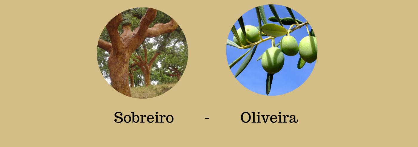 Alfarrobeiro - Limoeiro - Amendoeira - Laranjeira(1)