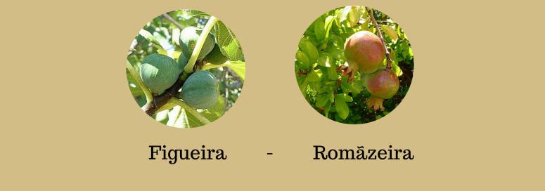 Alfarrobeiro - Limoeiro - Amendoeira - Laranjeira(2)