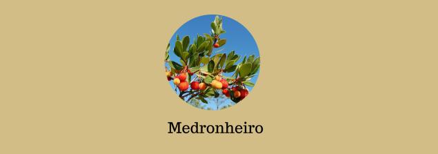 Alfarrobeiro - Limoeiro - Amendoeira - Laranjeira(3)